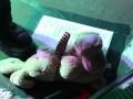 unzucht-rosenkreuzer-10-von-45