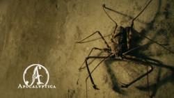 Newsflash (Apocalyptica, Neaera, Ruhrpott Rodeo)